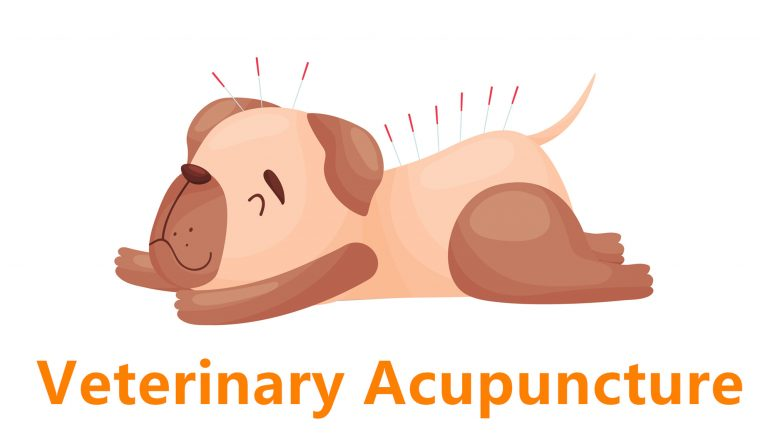 Have You Heard About Veterinary Acupuncture and How Does it Work – see here!